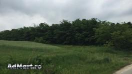 Vand 219 Ha. teren padure zona Balcesti/Valea Mare