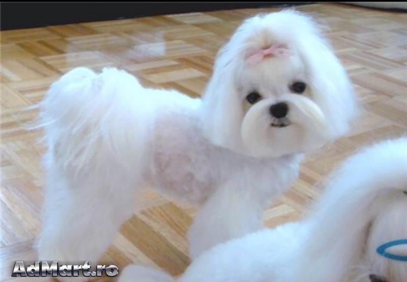 Cosmetica Canina Si Felina La Domiciliu Servicii Animale De